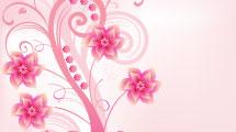 Planta Rosa