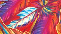 Plumas multicolores