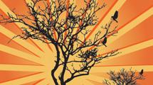 Árbol con fondo naranja y aves