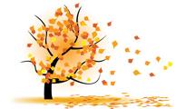 Árbol durante el otoño