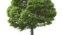 Árbol realista