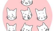 Rostro de gato