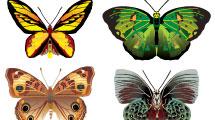 Set con variedad de mariposas