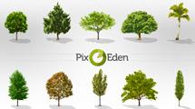 Set de árboles realistas