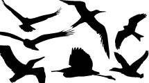 Silueta de Aves