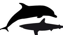 Siluetas de Animales Marítimos