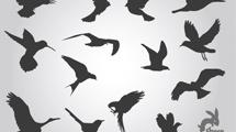 Siluetas de aves en pleno vuelo