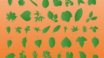 Siluetas de hojas verdes