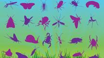 Siluetas de insectos en violetas