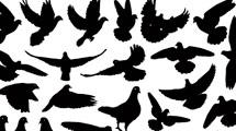 Siluetas de palomas