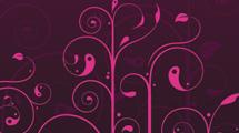 Swirls y adornos rosas
