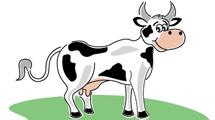 Vaca soriendo
