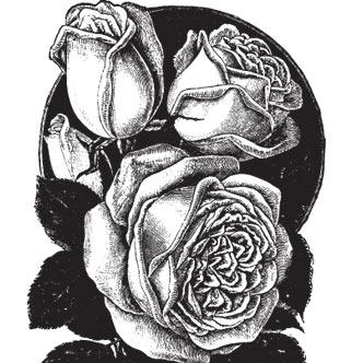 Vector Gratis De Rosas Realistas Decorativas En Tonos Blanco Y Negro
